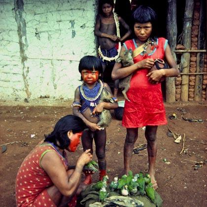 Three Kayapo people feeding small green parrots