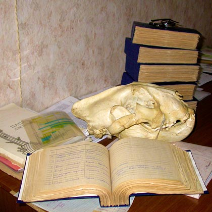 An open book, an animal skull, and a stack of books on a desk.